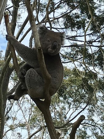 Cowes, أستراليا: photo4.jpg