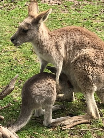 Cowes, Australien: photo7.jpg