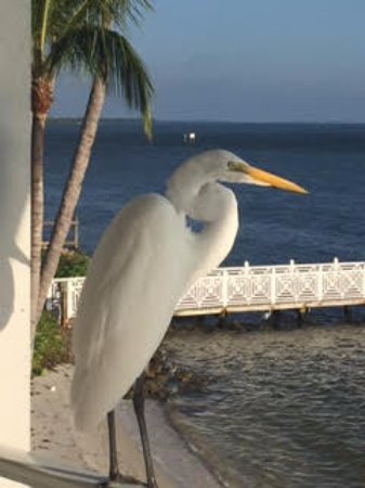 South Seas Island Resort : Look who joined me for my visit!!! Great views and I guess I should add..company!