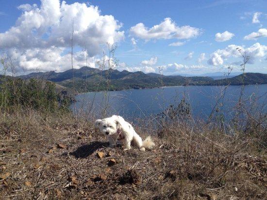 Capo Stella : Costa est dell'Elba dal punto più alto del promontorio (più cagnolino stanco)