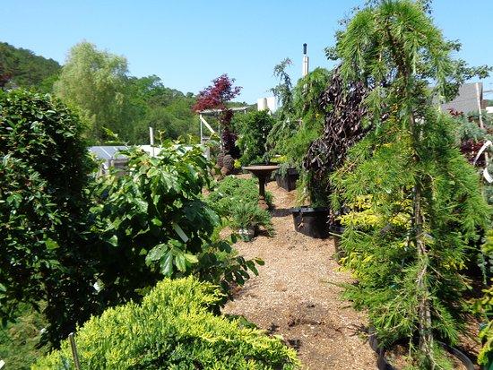 Truro, แมสซาชูเซตส์: It's more of a garden than a nursery