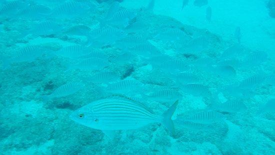 Club Tahiti: IMG_20150622_130702_257_optimized_large.jpg