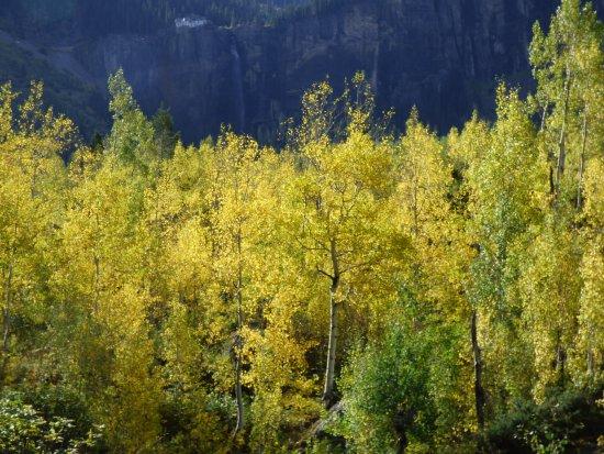 Telluride, CO: Aspens at Bride Veil Falls