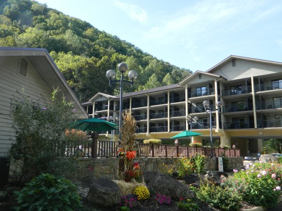 Tree Tops Resort Picture