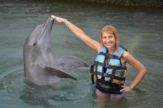 Dolphin Pose Picture Of Dolphin Discovery Puerto Aventuras Puerto Aventuras Tripadvisor
