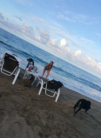 Le Cameleon Boutique Hotel: Stray dogs in beach area