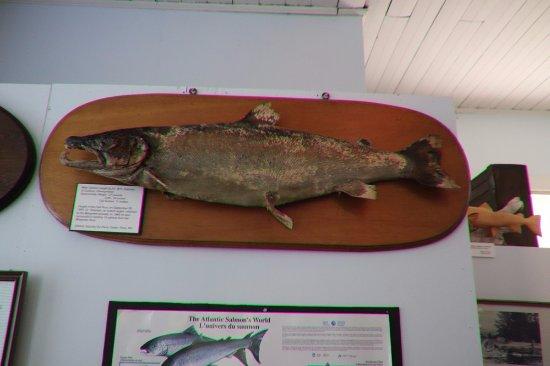 Margaree Valley, Canada: Salmon