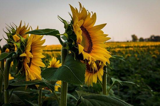Grinter Farms: photo6.jpg