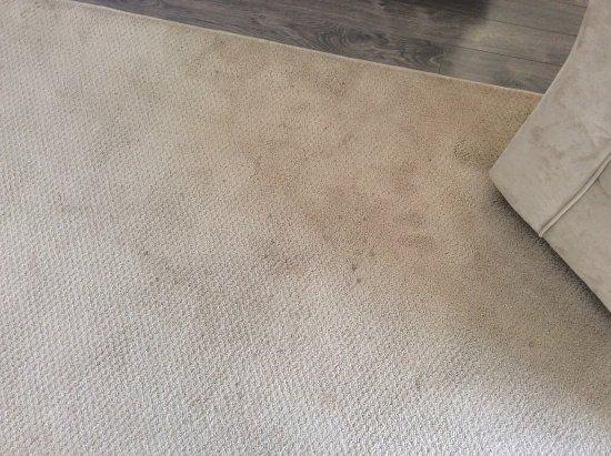 Golden Lake, Canada: Dirty carpet