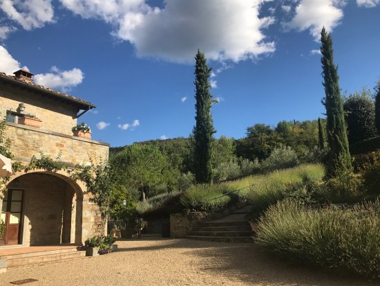 Casa Portagioia - Tuscany Bed and Breakfast: Steps up to the pool and vineyards