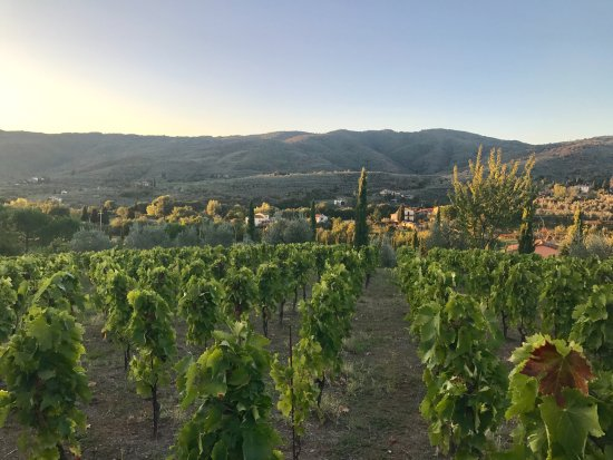 Casa Portagioia - Tuscany Bed and Breakfast: Terry and Marcello's Vineyards