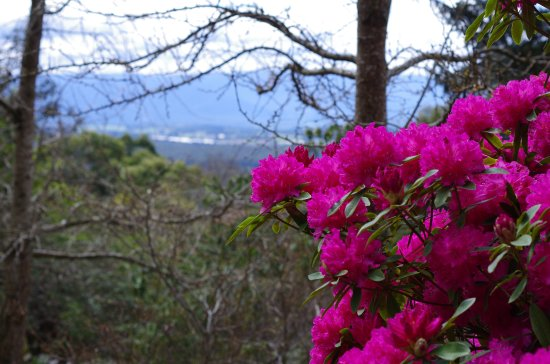 National Rhododendron Gardens: Pentax K5 50mm 1.8