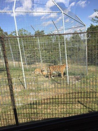 Turpentine Creek Wildlife Refuge: photo7.jpg