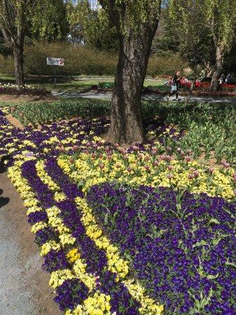 Tulip top gardens sutton australia top tips before you for Gardening 101 australia