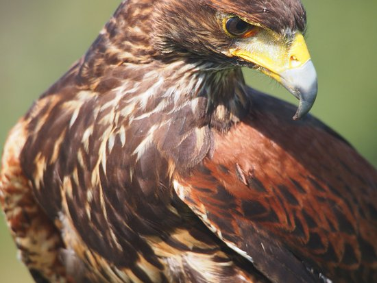 New england falconry coupon