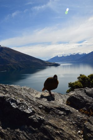 Eco Wanaka Adventures: Buff Weka with an awesome view