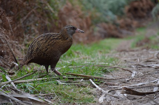 Eco Wanaka Adventures: Buff Weka