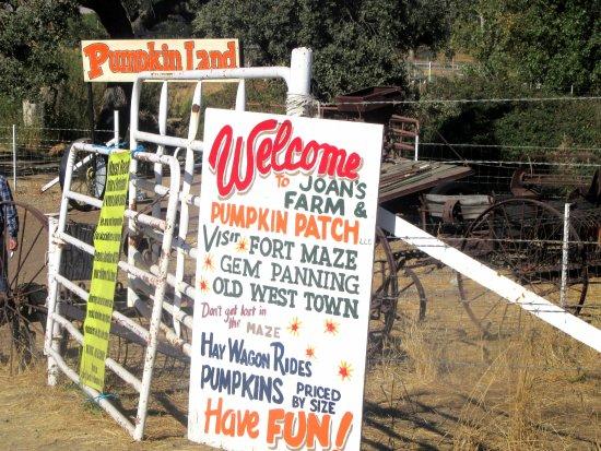 ลิเวอร์โมร์, แคลิฟอร์เนีย: Joan's Farm & Pumpkin Patch, Livermore, Ca