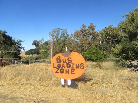 Pumpkin Patch, Livermore Valley, Ca