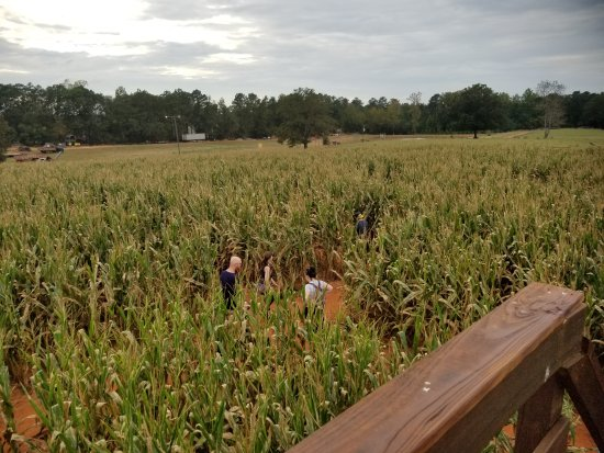 McDonough, جورجيا: Southern Belle Farm