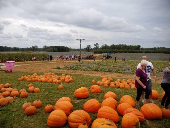 McDonough, GA: Southern Belle Farm