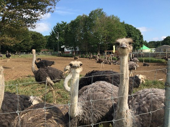 ‪Ostrich Kingdom Ishioka Farm‬