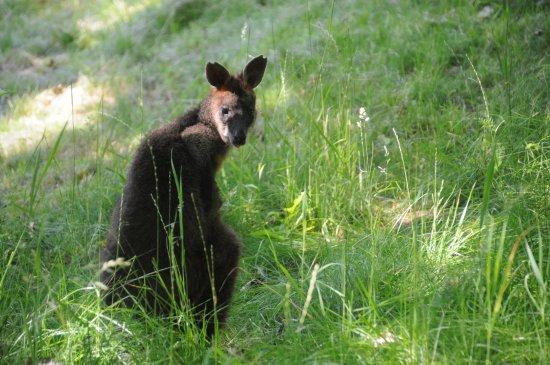 Brno, جمهورية التشيك: Zoo Brno