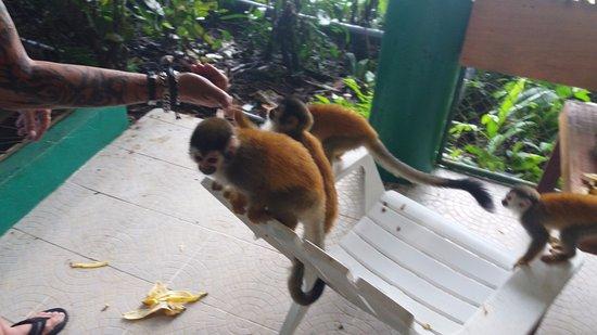 Jungle Villa Photo