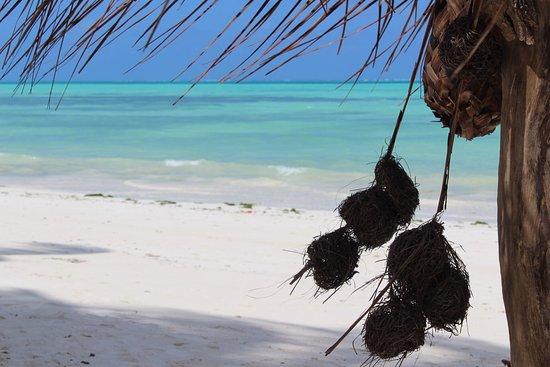 Art Hotel Zanzibar: photo2.jpg