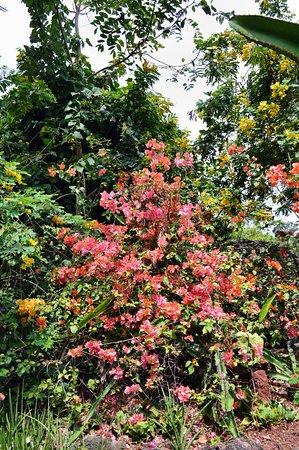 Jardin Du0027Eden: Blütenpracht Im Garten Eden