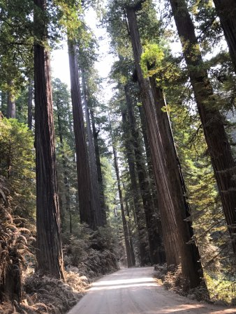 Jedediah Smith Redwoods State Park: On the dusty Howland Hill Road