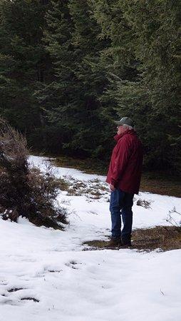Arthur's Pass National Park, Nieuw-Zeeland: snow in beech forest