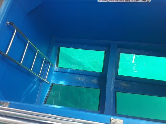 Captain Nick's Glass Bottom Boat Aphrodite : view of the junkers 52
