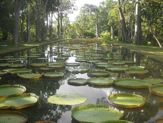 Jardin botanique bordeaux picture of jardin botanique de for Bordeaux jardin botanique