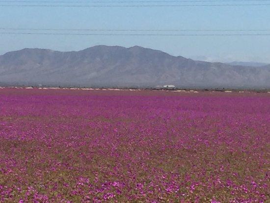 Antofagasta, Chile: photo0.jpg