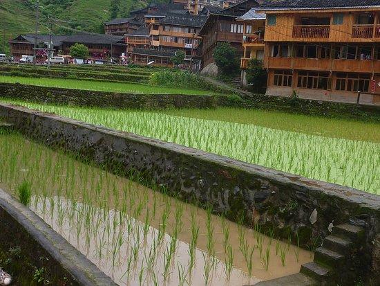 Beiliu, China: Reisterassen im Dorf