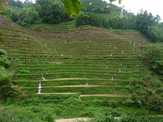 Beiliu, China: Reisterassen am Dorf