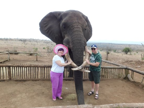 Leopard Walk Lodge: Elephant Interaction with Rambo