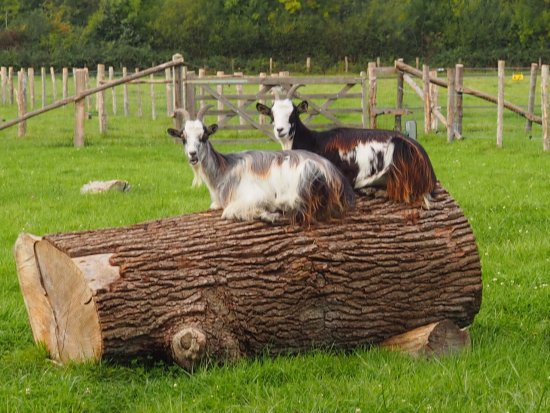 Arche de la Nature: Goats on a log