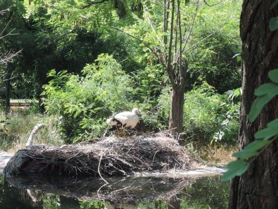 Nikolaev Zoo: аист