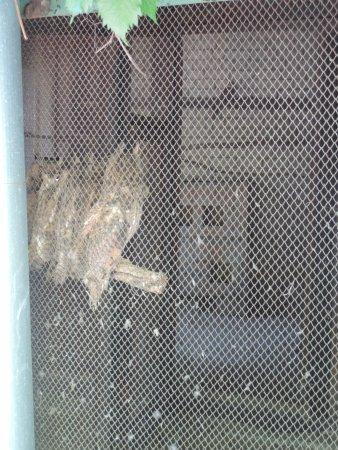 Nikolaev Zoo: совы