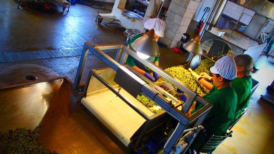 Archanes, Greece: Praca w rodzinnej manufakturze.