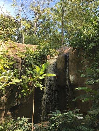 Foto De Cincinnati Zoo Botanical Garden Cincinnati Tripadvisor
