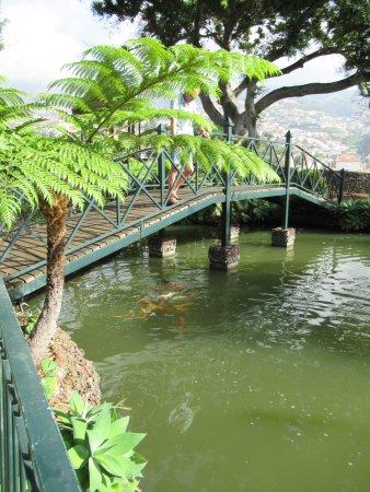 Quinta Jardins do Lago: Carp lake