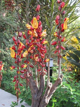 Quinta Jardins do Lago: Flower paradise
