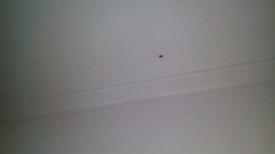 Exe Hotel Cataratas : Agujero en el techo