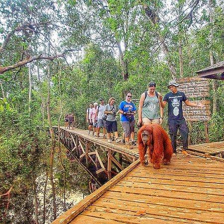 Pangkalan Bun, Indonesien: www.Oranutanviaje.Com - Parque Nacional Tanjung Puting, Kalimantan Central, Borneo