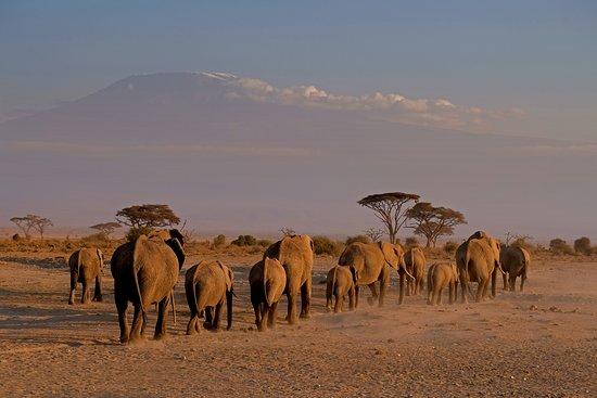 Amboseli National Park, Kenia: elephants and the Kilimanjaro