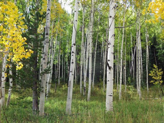 Clark, CO: Early Aspen change