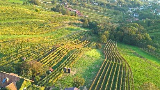 Lendava, Slovenia: Szépen művelt szőlők a kilátóból